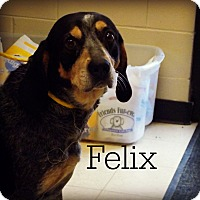 Adopt A Pet :: Felix - Defiance, OH