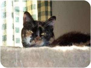 Calico Cat for adoption in McDonough, Georgia - Barbie