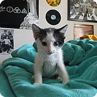 Adopt A Pet :: Aruba - Phoenix, AZ