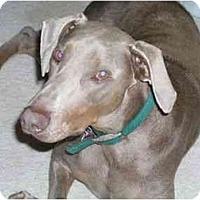 Adopt A Pet :: Buck - New Richmond, OH