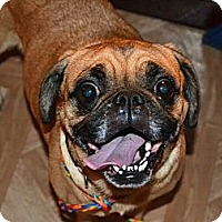 Adopt A Pet :: Mollee ~ Adoption Pending - Youngstown, OH