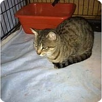 Adopt A Pet :: Milley - Clay, NY