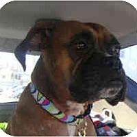 Adopt A Pet :: Aliyah - Grafton, MA