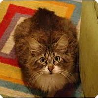 Adopt A Pet :: Cheesey--PETSMART - Muncie, IN