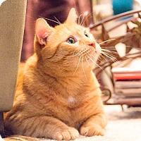 Adopt A Pet :: Eisenhower - Chicago, IL