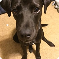 Adopt A Pet :: Nick - Wappingers, NY