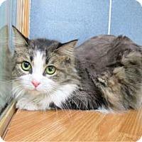 Adopt A Pet :: Darby - Davis, CA