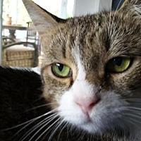 Adopt A Pet :: Pinkerton - Satellite Beach, FL