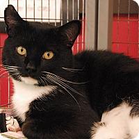 Adopt A Pet :: Parker - Winchendon, MA
