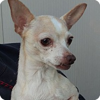 Adopt A Pet :: Princess - Las Vegas, NV