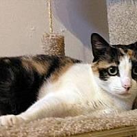 Adopt A Pet :: Claudia - Lilburn, GA