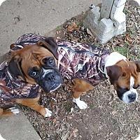 Adopt A Pet :: Baby - E. Greenwhich, RI