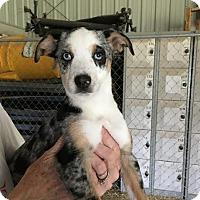 Adopt A Pet :: Adell meet me 4/7 - Manchester, CT