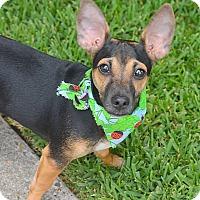 Adopt A Pet :: Tecate - San Leon, TX
