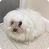 Adopt A Pet :: Sophi - Fall River, MA