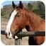 Photo 1 - Quarterhorse/Other/Unknown Mix for adoption in Washington, Connecticut - Charlie