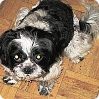 Adopt A Pet :: Cassi - Gilbert, AZ