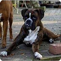 Adopt A Pet :: Magnum - Thomasville, GA