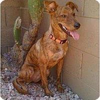 Adopt A Pet :: Grindle - Phoenix, AZ