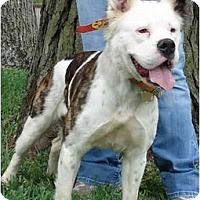 Adopt A Pet :: Ellie - Kingwood, TX