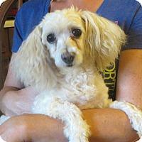 Adopt A Pet :: Tiffany - Greenville, RI
