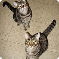 Adopt A Pet :: Cha Cha - Merrifield, VA