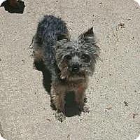 Adopt A Pet :: Carter - Mount Gretna, PA