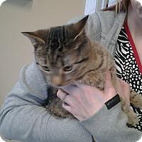 Adopt A Pet :: Archie - Memphis, TN