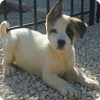 Adopt A Pet :: Ace - Orlando, FL