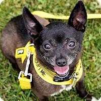 Adopt A Pet :: Fredo - Bealeton, VA