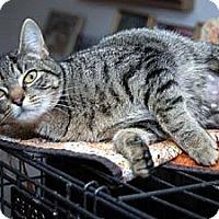 Adopt A Pet :: Gabriella - Alexandria, VA