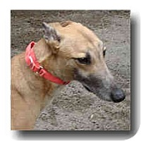 Adopt A Pet :: Oswald - Roanoke, VA