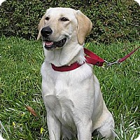 Adopt A Pet :: Nala - Santa Ana, CA