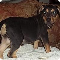 Adopt A Pet :: Sparkle - P, ME