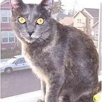 Adopt A Pet :: Emily (video) - Portland, OR