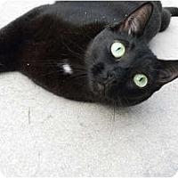 Adopt A Pet :: Sarafina - Naples, FL