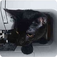 Adopt A Pet :: Rye - San Ramon, CA
