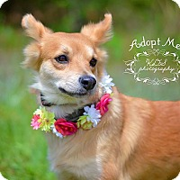 Adopt A Pet :: Billy Sue - Fort Valley, GA