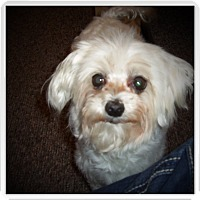 Adopt A Pet :: CARLY - Medford, WI
