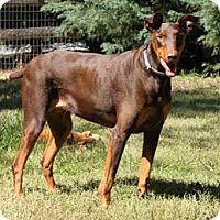 Adopt A Pet :: KOTA - Greensboro, NC