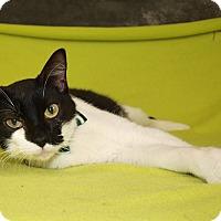 Adopt A Pet :: Zorro - Jackson, MS