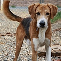 Adopt A Pet :: Shiloh - Lovingston, VA