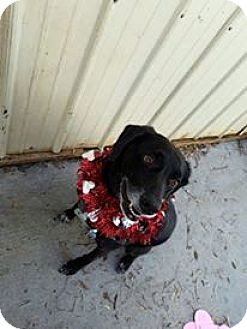 Pointer Mix Dog for adoption in Kalamazoo, Michigan - Franklin