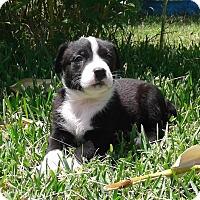 Adopt A Pet :: Kenzie - Copperas Cove, TX