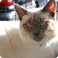Adopt A Pet :: Mingo (in CT) - Manchester, CT