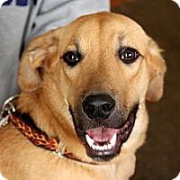 Adopt A Pet :: Rupert - Dallas, GA