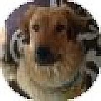 Adopt A Pet :: Misty - Denver, CO