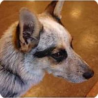 Adopt A Pet :: Petey - Phoenix, AZ