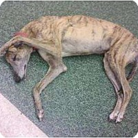 Adopt A Pet :: Express - Vidor, TX
