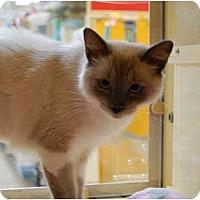 Adopt A Pet :: Kim - Modesto, CA